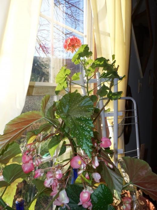 Heirloom houseplants serve as memorials.