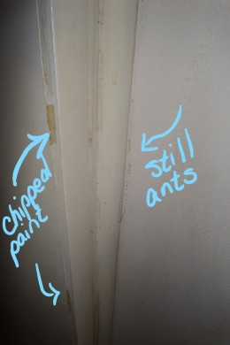 Chipped paint was on the bathroom walls as well as some of the side tables and walls in the living space. The whole place needed a makeover.