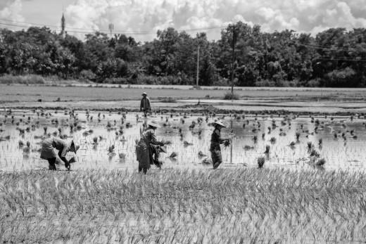 Tax farming