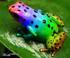 Tebanicline (Ebanicline, ABT-594) is a potent synthetic nicotinic (non-opioid) analgesic drug developed by Abbott. It was developed as a less toxic analogue of the potent poison dart frog-derived compound epibatidine,