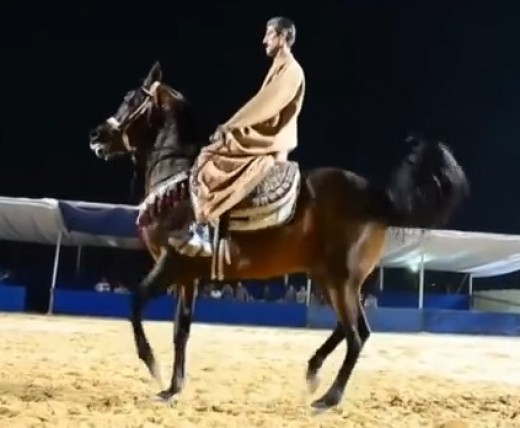 Baladi horse By Unknown