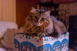 Often times local humane shelters look for additional assistance over the holidays.