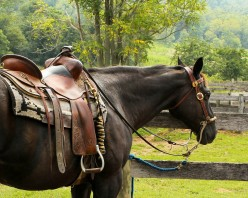 Cleaning Horse Tack: How to Make Homemade Saddle Soap