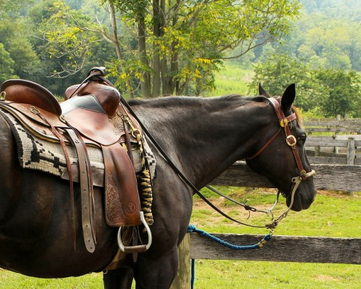Regular use of saddle soap maintains leather horse tack so that it lasts for years.