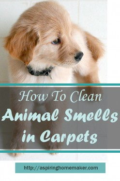 Eliminating Pet Smells from Your Home and Carpets