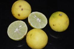 Lemon: Health Benefits of Eating Lemon