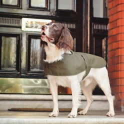 Why Buy Designer Dog Clothing
