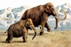 Environment → The mastodon is different from the mammoth?