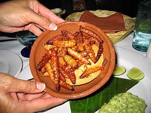 The edible gusanos are like large maggots