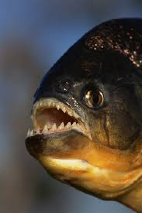 The farmer serial killer often tossed the remains of his victims in his man made lake which wee loaded full of piranha.