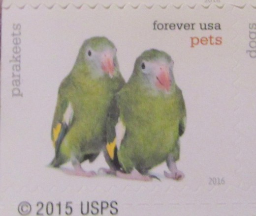Parrots are featured in the Postal Service's line of PETS stamps. - Photo by George Sommers