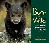 Born Wild in Glacier National Park by Donald M. Jones
