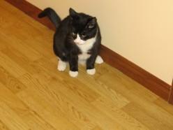 Callum: The rescue cat who rescued us