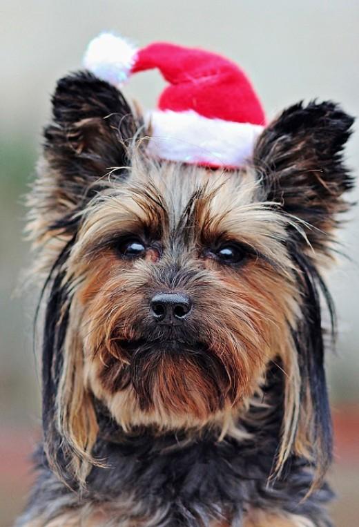 Santa Doggie