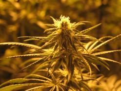 Smell the Marijuana?