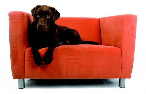 Pets are one of the many factors that render regular upholstery cleaning a must