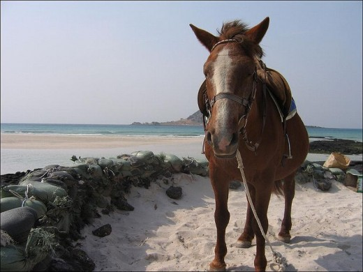 By Gilad Rom (originally posted to Flickr as A pony in Jeju) [CC BY 2.0 (http://creativecommons.org/licenses/by/2.0)], via Wikimedia Commons