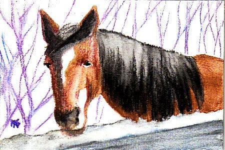 Horse, watercolor pencil, by Robert A. Sloan