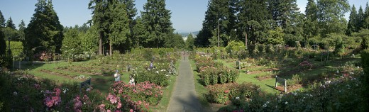 International Rose Test Garden in Portland, Oregon