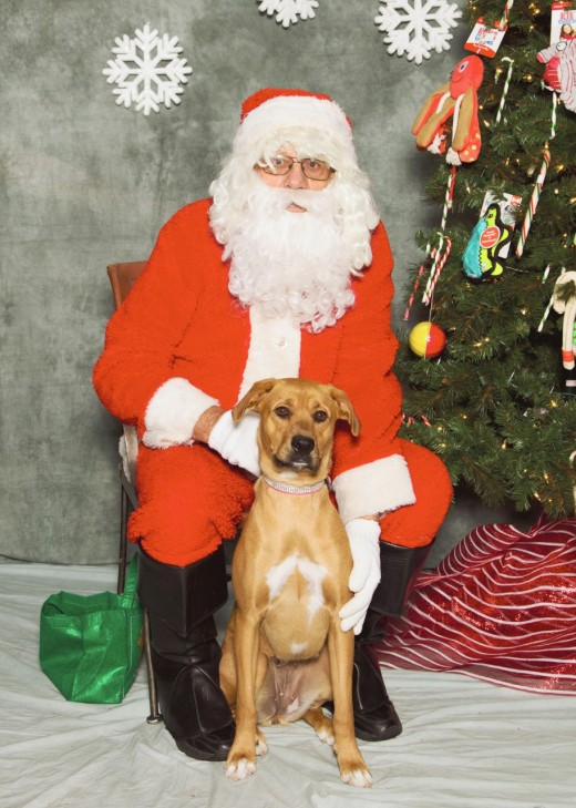 Original photo of my own fur baby Grace at a Christmas charity event.