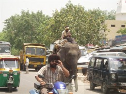 Animals are commonly seen on the Indian roads.