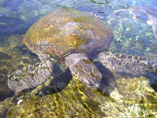 Turtle swimming near bottom of cove