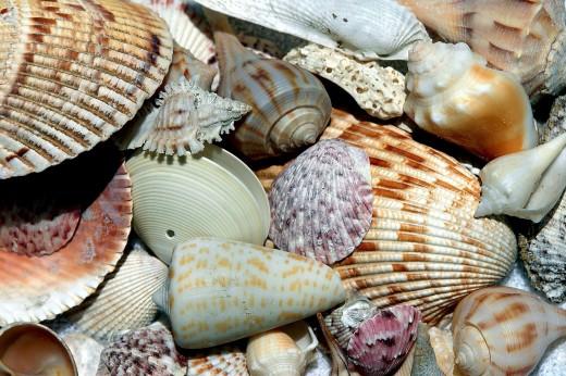 Colorful seashells washed ashore.