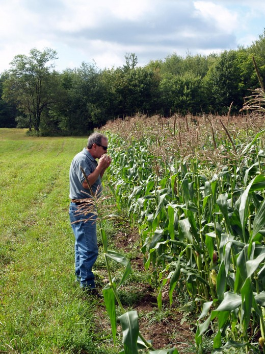 Special Thanks to my dad, for growing corn and teaching me as a child that the best corn is eaten raw, freshly picked!