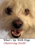 Understanding Your Dog's Teeth Chattering
