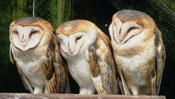 The Mysteries About Owls