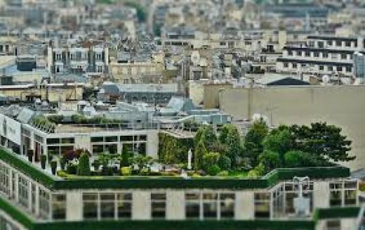 Modern rooftop garden.