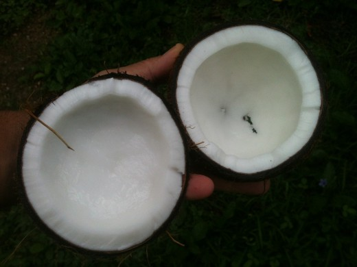 "Part of the Name Says It  -  Coconut Can Prevent Us from Going ""Nuts""  -  Excellent for Brain"