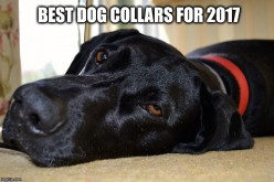 The Best Dog E-Collars and Flea Collars for 2017