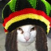 pymcat profile image