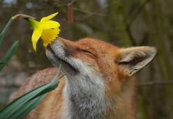 To Smell The Roses