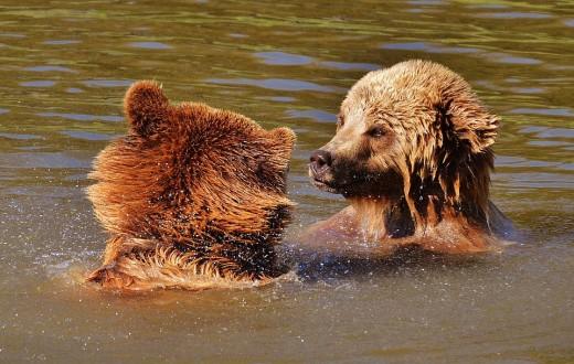 Don't get near the wild animals.......