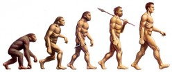 Human Evolution - Why Are There Still Apes?