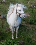 13 Of The Most Incredibly Beautiful Pony Types In The World