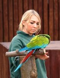 Why a Parrot Should be Taught to Step Up