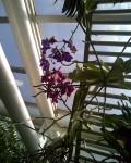 Orchids, Brooklyn Botanic Garden / E. A. Wright 2009