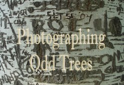 * Photographing Odd Trees