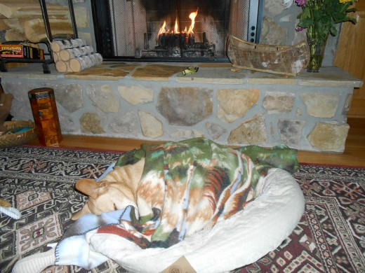 Even pets like to cozy up by a fire on cold winter nights!