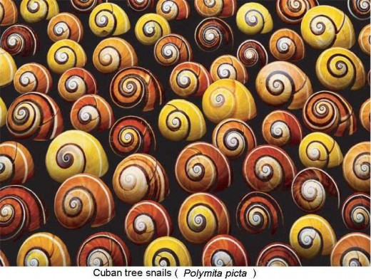 Phenotypic variation in Color and Spiral Pattern in Snail Shells