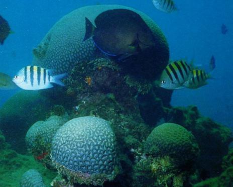 OCEAN LIFE ON COAST OF BAHIA STATE BRAZIL