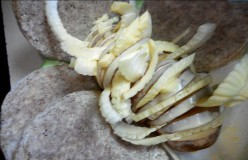 Minnesota Cooking: Baked Potato - Infused With Sliced Onion