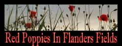 * Red Poppies in Flanders Fields