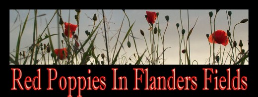 Red Poppies in Flanders Fields