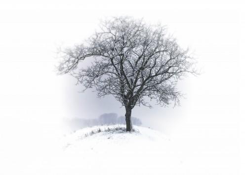 Elijah became despondent and discouraged and slept under a tree.
