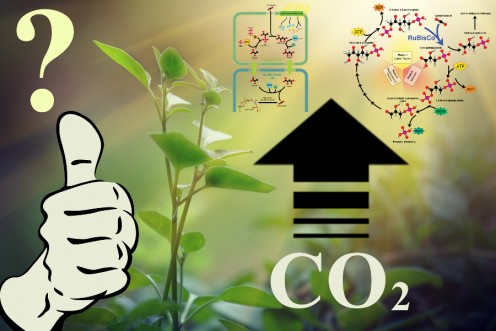 Picture about CO2 benefiting plants, compiled by Robert G. Kernodle from public sources