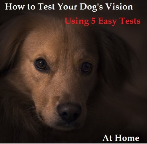 How to Test Your Dog's Vision at Home